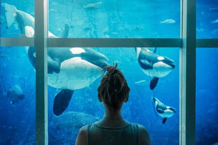 A woman looking at whales in an aquarium