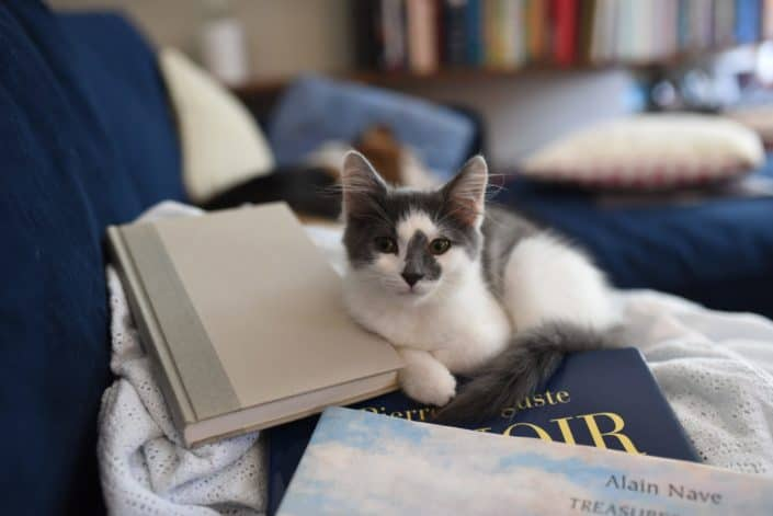 a cute cat on top of books
