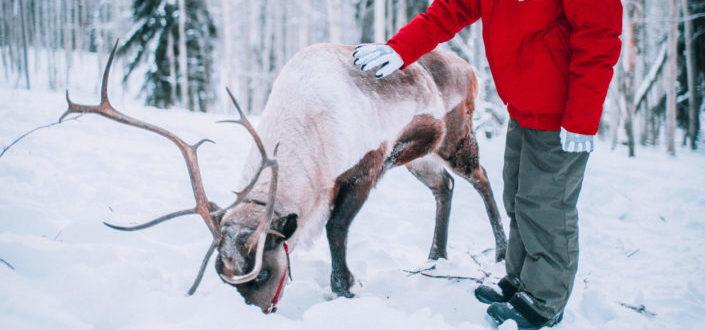 A man petting a reindeer