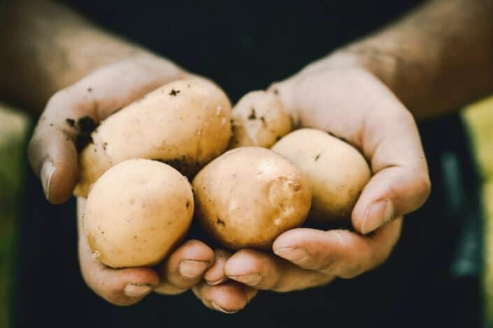 hands holding a bunch of potatoes