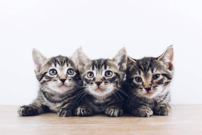 three cute kittens lying on the floor