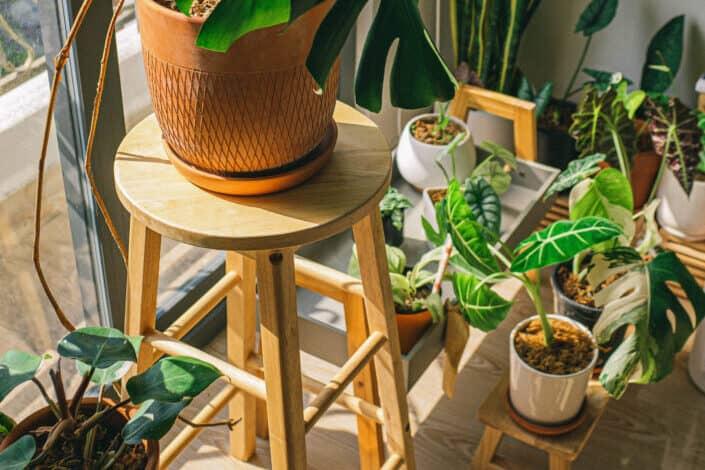 Photo of houseplants