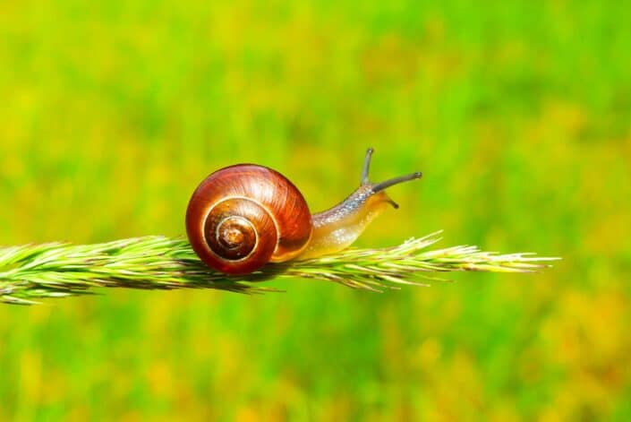 selective focus photography of a snail on plant