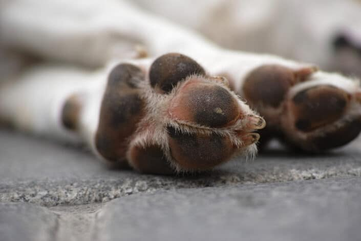 paws of dog lying