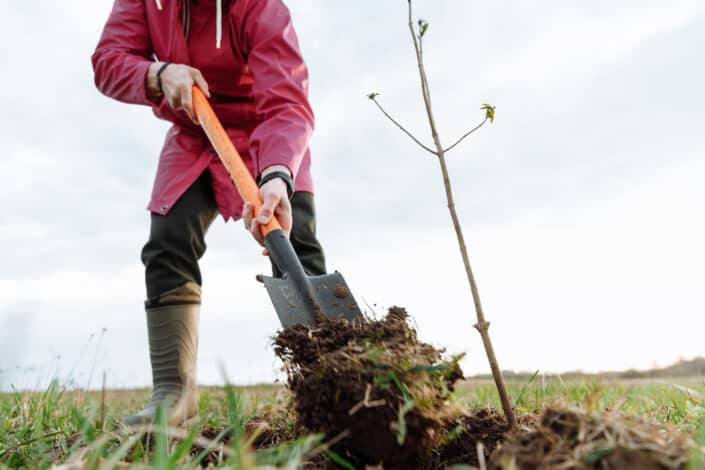 Man shoveling the soil